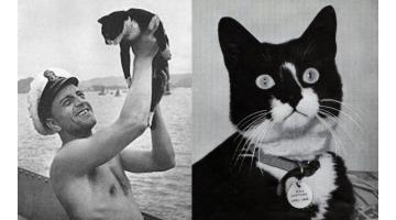 Непотопляемый Сэм. История кота-мореплавателя.